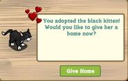 Happy Black Cat