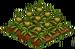 Australian Pineapple 66