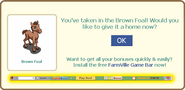 Brown foal give home