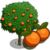 Orange Tree-icon