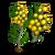 Golden Wattle-icon