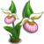 Lady Slipper (bloom)-icon
