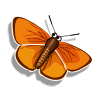 Copper Butterfly-icon