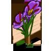 Saffron Mastery Sign-icon