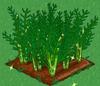 Asparagus extra100.png