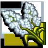 White Sorghum-icon