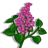 Lilac-icon