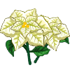 White Poinsettia-icon