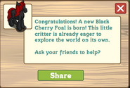 Black cherry foal message