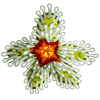 Sparky Star Flower-icon