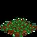 Cucumber 33