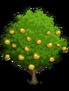 Asian Pear Tree2-icon