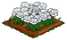 White Rose extra100