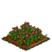 Red Clover 100