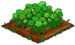 Green Rose 100