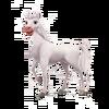 Camarillo Horse