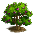 Beautyberry Tree.png