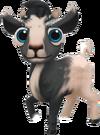 Baby Dutch Landrace Goat
