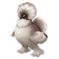Adult Silkie.png