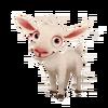 Baby Saanen Goat