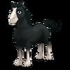 Black Shire Horse