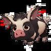 Black Spotted Ossabaw Hog