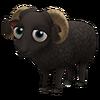 Massese Sheep