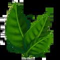 Black Tea Plant.png