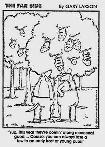 File:1986-01-04 - treegrownkitties.png