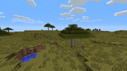 Acaciatrees