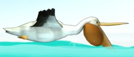 File:Pelican 2.jpg