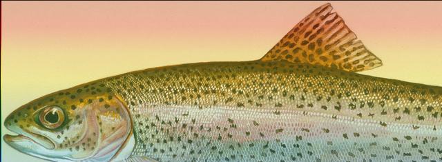 File:Rainbow Fish.png
