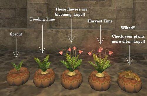Gardening Step-by-step