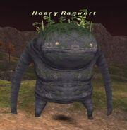 Hoary Ragwort