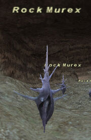 Rock Murex