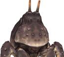 Vermilion Crab (MON)