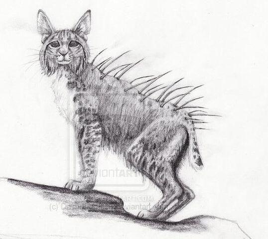 File:Splintercat.jpg