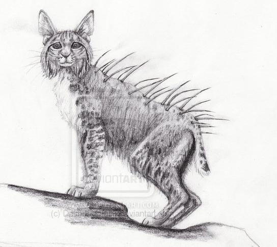 Splintercat