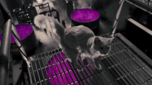 File:Cats-dogs-revenge-movie-screencaps.com-3322.jpg
