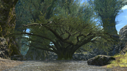 FFXIV Guardian Tree