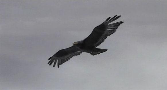 File:The Eagle.jpg