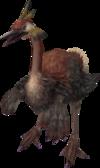 Epiornis-ccvii