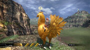 Chocobo question mark