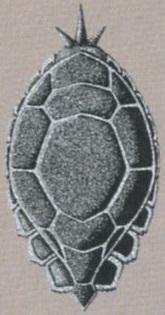 FFVI Tortoise Shield Artwork