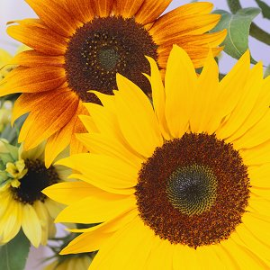 File:Wedding-Anniversary-Flowers-sunflowers.jpg