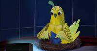 Birdmom