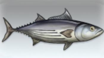 File:Skipjack Tuna.jpg