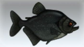 File:Black Piranha.jpg
