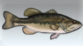 File:Largemouth Bass.jpg