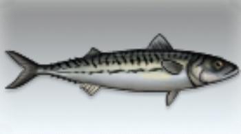 File:Mackerel.jpg